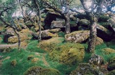8 Real-World Forests That Look Like They Belong in a Fantasy Novel   Atlas Obscura