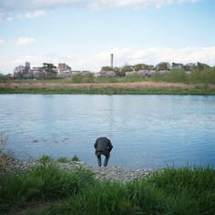 The Tama River © Kentaro Takahashi