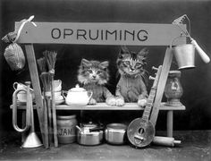 1660 Best Vintage And Retro Kitties Images In 2020