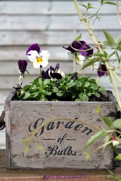 Pansies in wooden box....perhaps made by Glitterfarm?