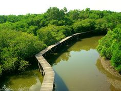 exploring the bali mangrove forest