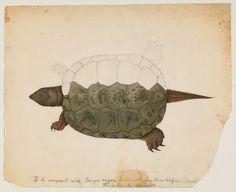 Western pond turtle? (San Francisco, California) | Flickr: Intercambio de fotos