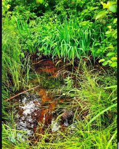 A little time in nature never hurts :) . . . #water #natural #naturephotography #nature #travel #hiking #hikingadventures #outdoorphotography #outdoors #landscape #landscapephotography #lily #exploring #explorer #adventure #adventurer #like #love #followforfollow #follow #picoftheday #photooftheday #photography #green #pond #reflection #spring #instagram #instagood #photographer http://misstagram.com/ipost/1552644443991388973/?code=BWMGeVClzMt