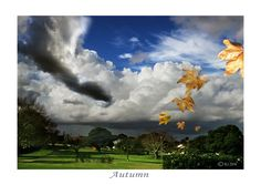 AUTUMN (prints available) - leaves, cloud pictures, pictures of skies, falling leaves, pictures of clouds, sky pictures, weather