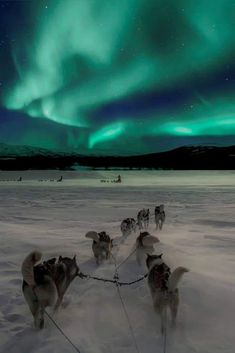 10 tips for photographing the Northern Lights no matter where your travels take you from Iceland to Alaska to Canada to Lapland and more. Similar to painting with light capturing the Aurora Borealis properly can be difficult. Photography Guide, Nature Photography, Travel Photography, Landscape Photography, Fashion Photography, Photography Backgrounds, Adventure Photography, Winter Photography, Amazing Photography