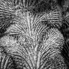 #Cactus Garden, #Lanzarote, #CanaryIslands - - www.gdecooman.fr portfolio, cours et stages photo à Lille, visites guidées de Lille.