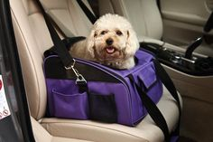 CreaTion® 2 in 1 Pet Car Seat Carrier And Travel Bag for Dog Cat/ Booster Seat for Cars, Truck and SUV ** Click image for more details.