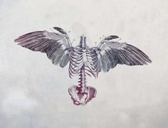 43 Damien HIRST Art Creations