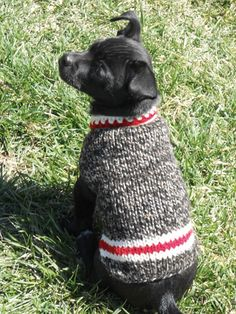 """""""Chilly Dog Boyfriend Dog Sweater."""" Riva would love a sweater like this for Gidget because it looks like a sock monkey sock. I think I need to come up with matching sweaters for the two of them. -CAB"""