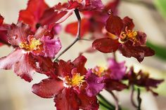 Here's your source for everything orchid-related, from buying plants to blooming them, plus descriptions of the five most popular orchid species.