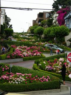 Lombard Street. San Francisco, California. Curviest street in the WORLD! Drove down it 3 times! #baycityguide #sanfrancisco