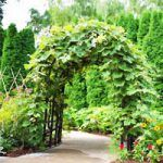 The pergola kits are the easiest and quickest way to build a garden pergola. There are lots of do it yourself pergola kits available to you so that anyone could easily put them together to construct a new structure at their backyard. Diy Pergola, Cheap Pergola, Wooden Pergola, Outdoor Pergola, Pergola Kits, Pergola Ideas, Pergola Canopy, Metal Pergola, Pergola Shade
