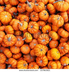 Pumpkin Halloween Stock Photos, Images, & Pictures | Shutterstock