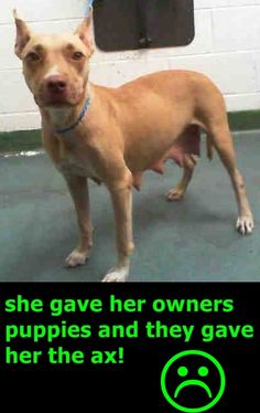 11/19 NO SHARES!! PLEASE HELP!!! BEAUTIFUL (A1739397) I am a female tan and white Pit Bull Terrier mix.  The shelter staff think I am about 3 years old and I weigh 42 pounds.  I was found as a stray and I may be available for adoption on 11/17/2015. Miami Dade https://www.facebook.com/urgentdogsofmiami/photos/pb.191859757515102.-2207520000.1447624248./1076030255764710/?type=3&theater
