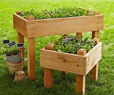bring your gardening to new heights with an elevated planter box