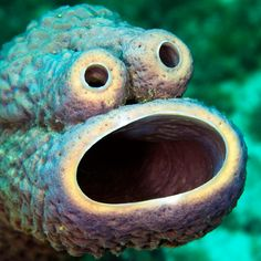 """Underwater photographer Mauricio Handler was scuba diving near the reefs of Curacao, in the Caribbean Sea, a while back and made an amusing discovery. Handler's wife, Julia, spotted this Cookie Monster look-alike hanging out under the sea, presumably trying to hide out among less-notable creatures. It wasn't actually the beloved dessert fiend from """"Sesame Street"""". It's actually a stove-pipe sponge, which eats plankton, not cookies or anything even close."""