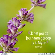 Lééf Trust Love, Goeie Nag, Scripture Verses, Afrikaans, Inspire Me, Christianity, Blessed, Spirituality, Inspirational Quotes