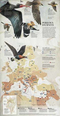 Bird migration by Fernando Baptista