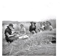 A sega do centeio. Canicouva,  década de 1950.