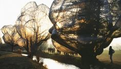 christo and jeanne claude wrapped trees (Switzerland 1997 - '98)