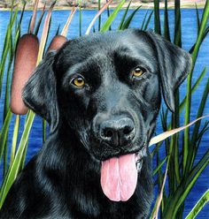 colored pencil labs - Google Search