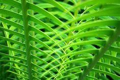 nature pattern - Cerca con Google