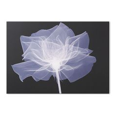 X-Ray Rose Black  White Photographic Print - Flower Wall Art by Graham  Brown
