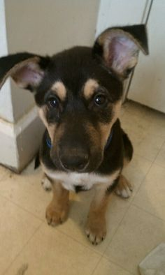 """""""This is Rex ruther, he is a Rottweiler/husky mix!"""" - Furry Friends Photo Contest #dogs #lucktastic"""