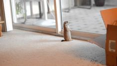 Our baby prairie dog, playing with our cat