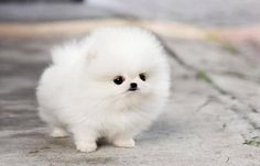 I want you!!!!