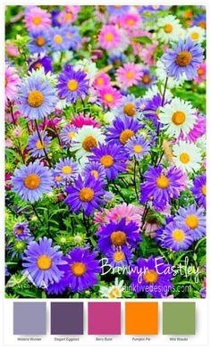 SU Colour Combinations for Daisy Delight