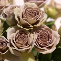 brown roses pictures - Google Search