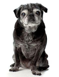 In Praise of Senior Dogs