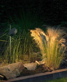 Portable LED garden luminaire with earth spike for the private sector · BEGA Small Garden Landscape, House Landscape, Landscape Architecture, Outdoor Tree Lighting, Plant Lighting, Garden Paths, Garden Landscaping, Blitz Design, Luminaire Led