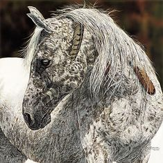 Judy Larson Art Image Keys to Hidden Images in Her Paintings All The Pretty Horses, Beautiful Horses, Animals Beautiful, Beautiful Beautiful, Caballos Appaloosa, Appaloosa Horses, Leopard Appaloosa, Native American Horses, Indian Horses