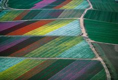 Flower Fields at Carlsbad, CA by Alex Maclean