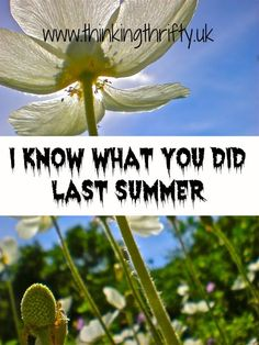 Last summer is gone, finito, smell you later. But what sort of damage did it do to your finances? I know what you did last summer! Grocery Shopping App, Rainy City, Finance Blog, Budgeting Tips, Ways To Save Money, Family Activities, Personal Finance, I Know, Promotion