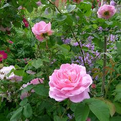 Roses and more by Mia's Country Living, Norway