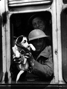 The Startled Mascot | The 26 Most Badass Animals From World War II