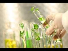 Plant Tissue Culture - YouTube