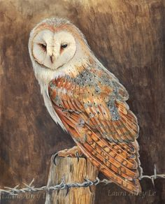 Barn Owl by MorRokko on deviantART