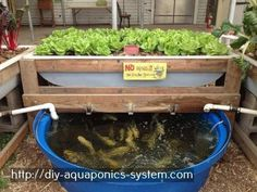 how to build your own aquaponics system - hydroponic greenhouse design.hydroponic greenhouse manufacturers 2602906513