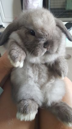 Baby Animals Super Cute, Cute Baby Bunnies, Cute Little Animals, Cute Funny Animals, Cute Dogs, Cute Bunny Pictures, Baby Animals Pictures, Cute Animal Pictures, Pet Bunny Rabbits