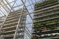 verticalfarm  //First Vertical Farm Opens in Singapore   Wired Design   Wired.com  世界初、商用スケール「垂直農場」がシンガポールに誕生 http://wired.jp/2012/11/05/vertical-farm-in-singapore/ via @wired_jp