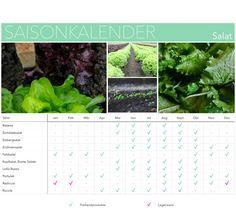 Saisonkalender Salat: Wann kann ich was kaufen?