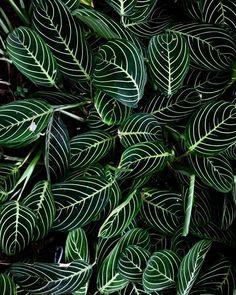 75 Greens Ideas Planting Flowers Plants House Plants