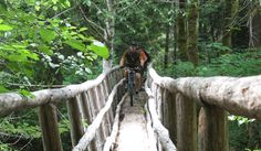 Oregon wood bridge