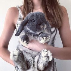 Everything you need to know about bunnies | allthestufficareabout.com bunny images, pictures involving bunnies, best bunny photoshoot ideas, funny pets, pets being funny, rabbits being funny, bunnies being funny, cute photoshoot ideas with bunnies, beautiful bunny bunny feet