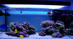 All sps tanks - Page 7 - Reef Central Online Community 100g rimless
