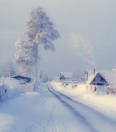 Winter in Siberia - Freezing to us - our Siberian Huskies would LOVE this!